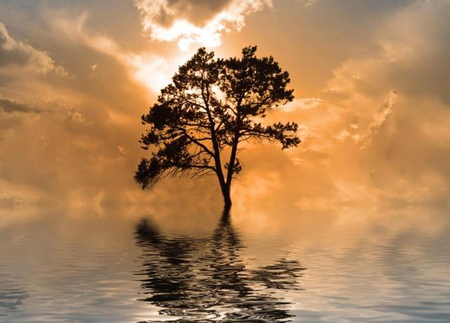 tree-in-water